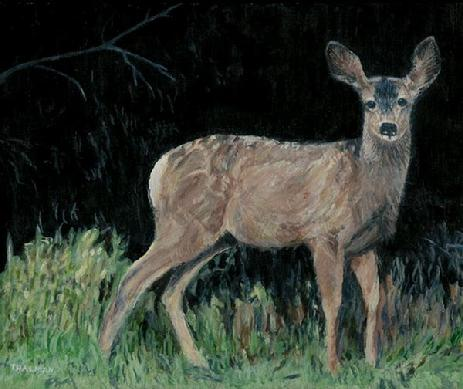 Yearling by Mark Thalman